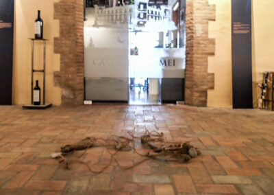 2013 Feb - CAstell del Remei Palmira Rius-4